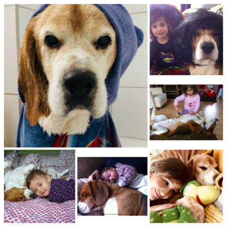 Mein Leben mit meinem Hund Snooker🐶