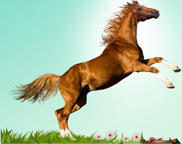 Pferde undPonys🐎