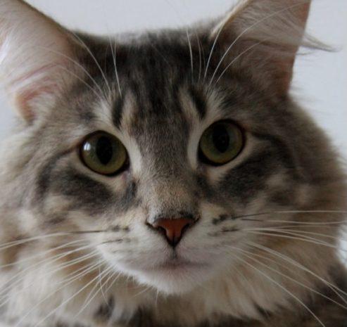 Mein Katze 🐈⬛🐈⬛🐈⬛🐈🐈⬛🐈